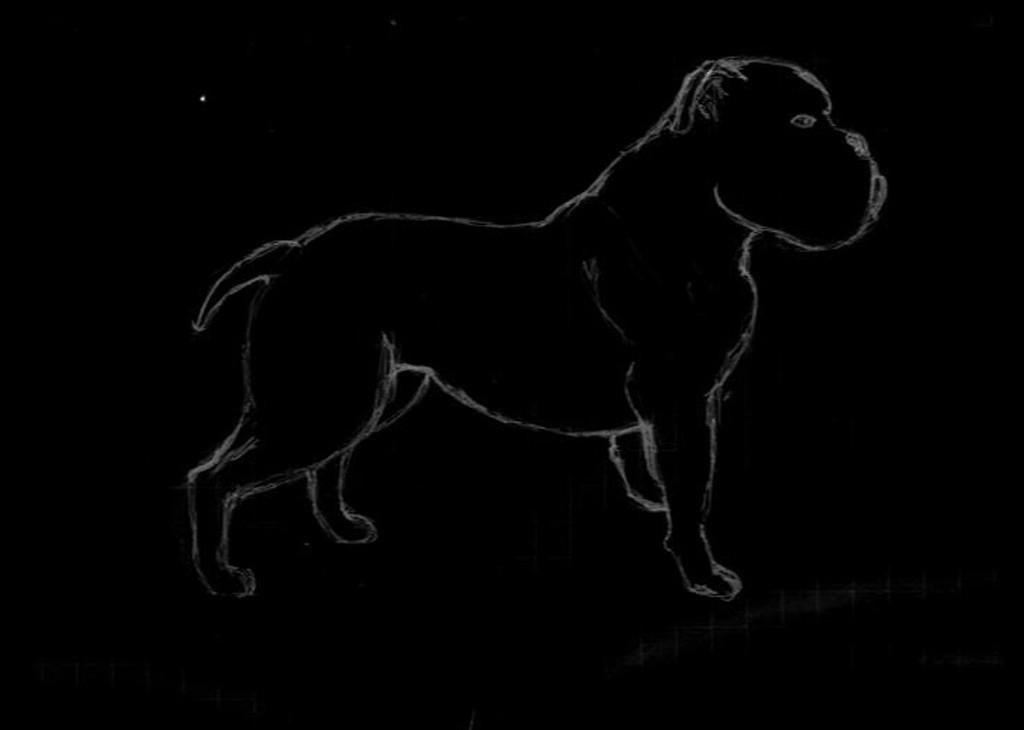 Sketch of Olde English Bulldogge