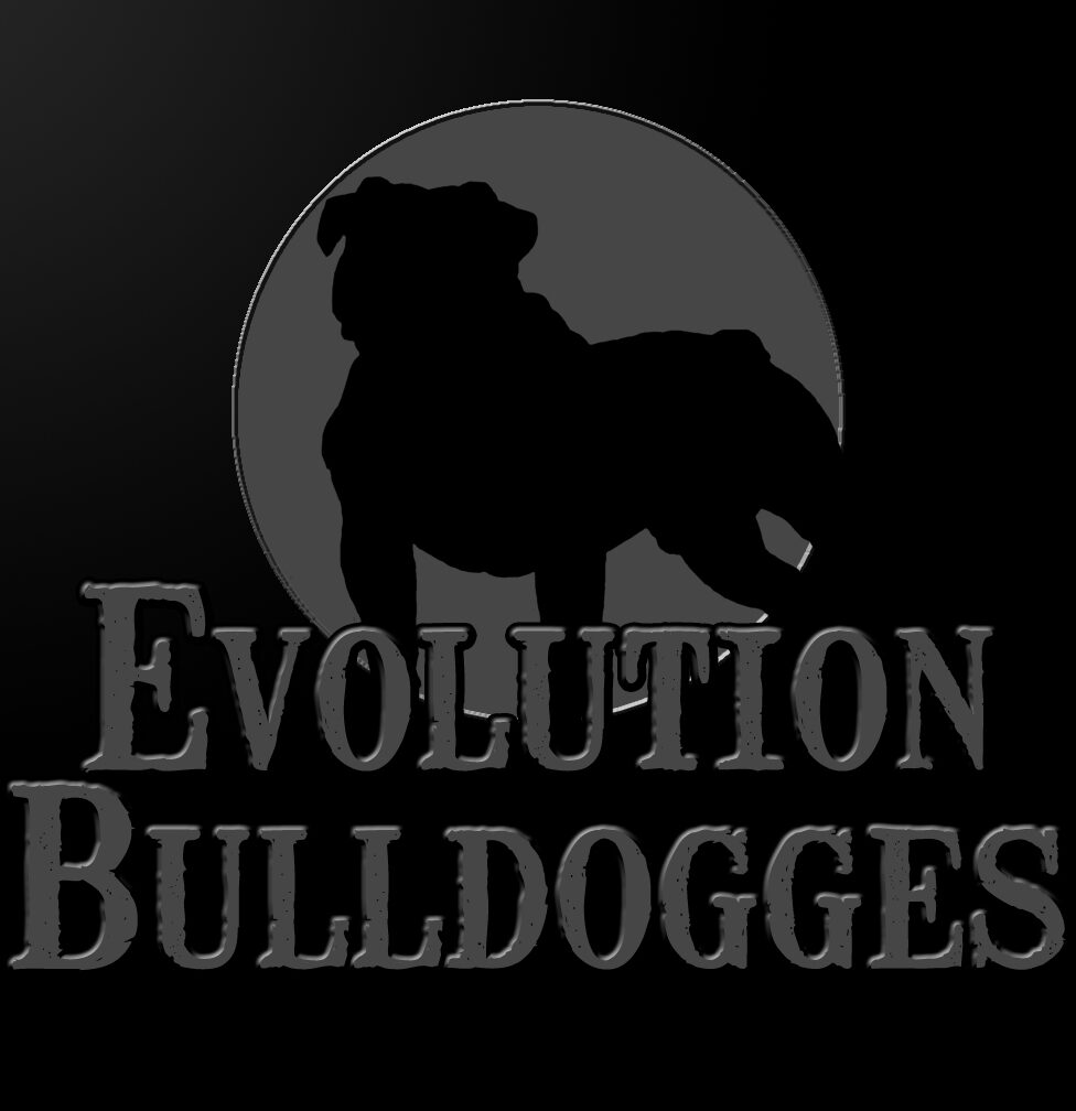 Evolution Olde English Bulldogges