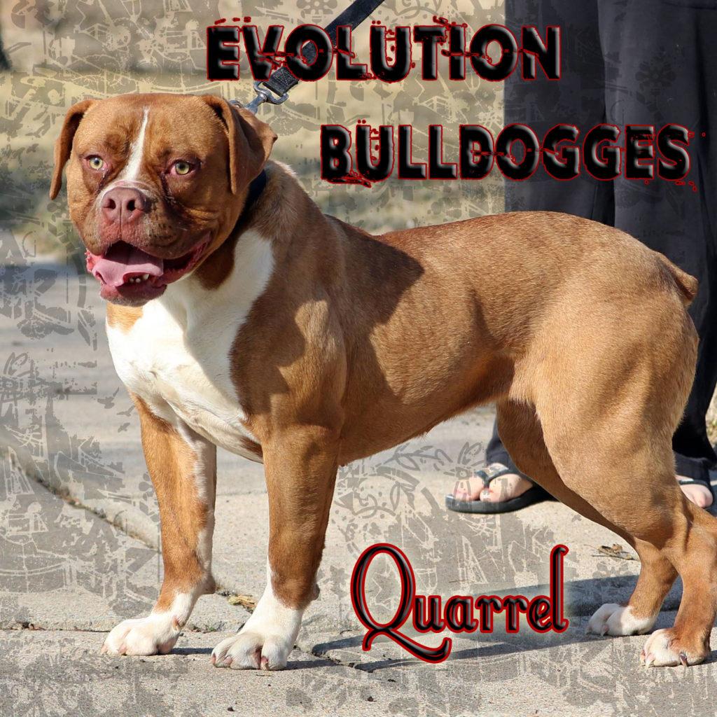 Evolution's Quarrel