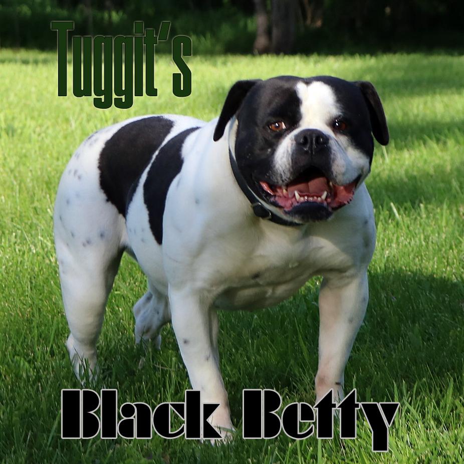 Tuggit's Black Betty