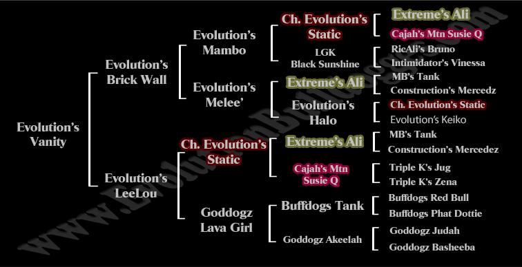 Evolution Vanity Pedigree